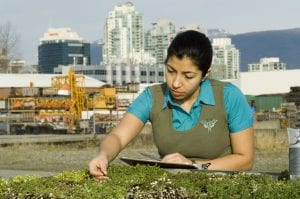A woman examines plants at the Green Roof Research Facility