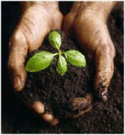 Image of hands holding some dirt with 4 green sprouts popping up.