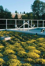 Image of green roof at great northern way campus.