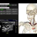 Medical diagram of a skeleton.