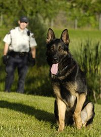 Photo of german shepherd dog and handler.