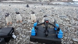 penguins looking at drone on the ground