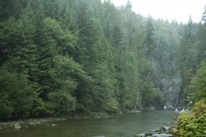 A rivers surrounded by trees