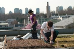 Two students working on the green roof at BCIT