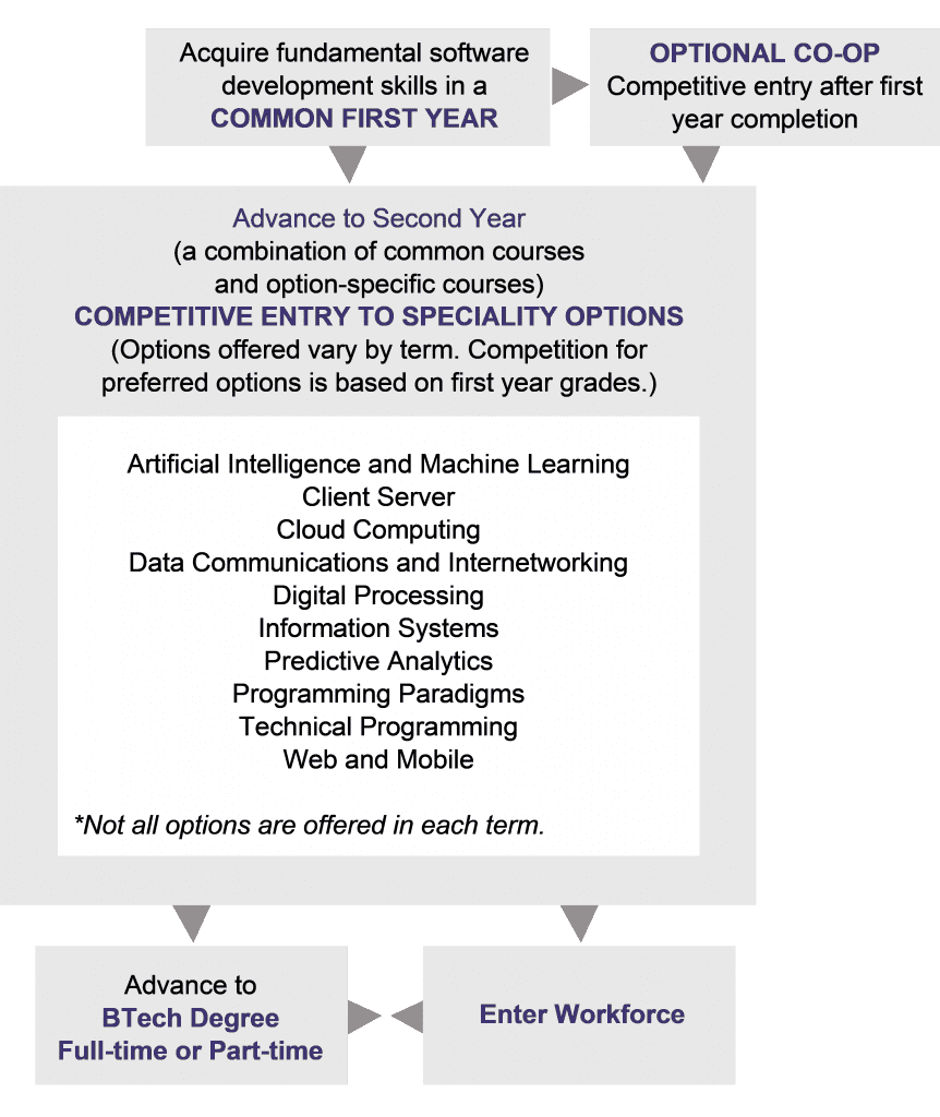 graphic of paths from common first year to entering workforce