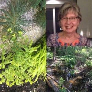 collage of instructor and plants