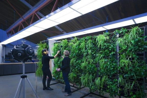 two people in front of living wall