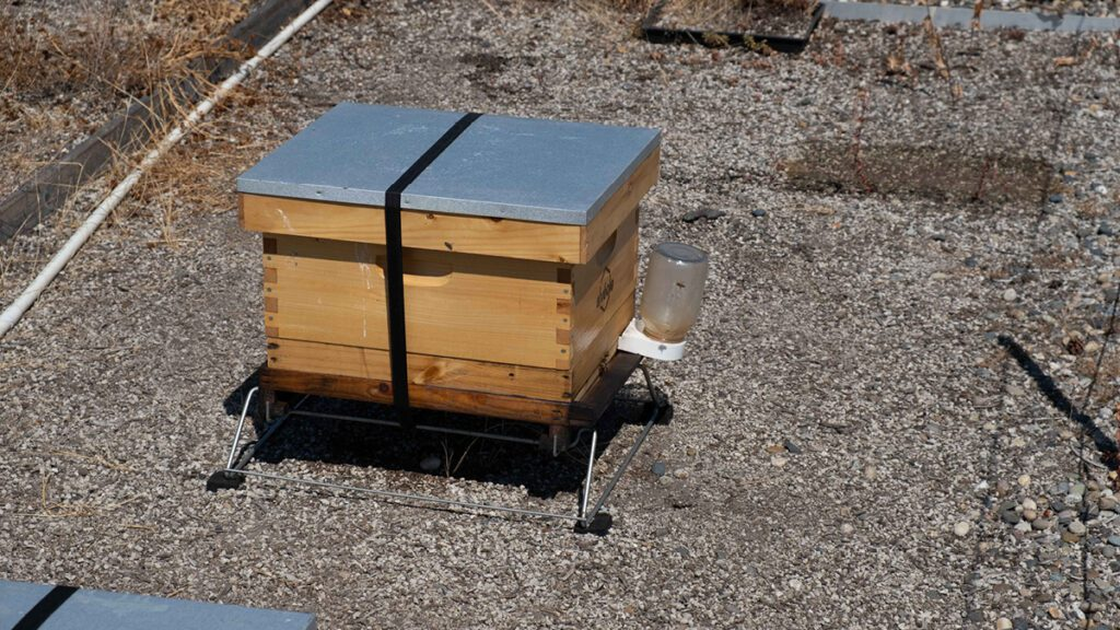 A bee hive on a roof at BCITs Burnaby Campus
